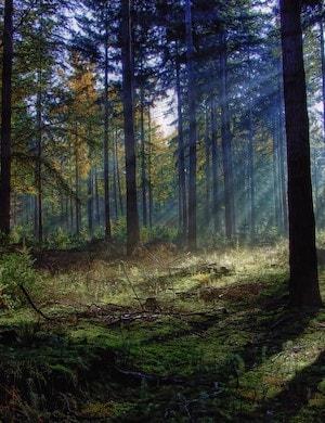 Звук шума леса и пение птиц слушать онлайн