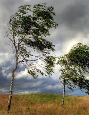Звук шума ветра слушать онлайн